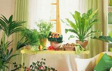 卧室摆放什么植物好,这些植物不能乱放!